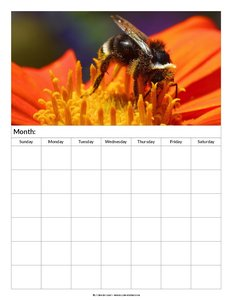 blank calendar bee 6 weeks