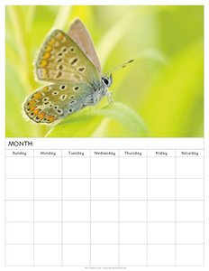 free-blank-monthly-calendars-to-print-with-butterfly