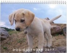 dog calendar 2017 with your photo