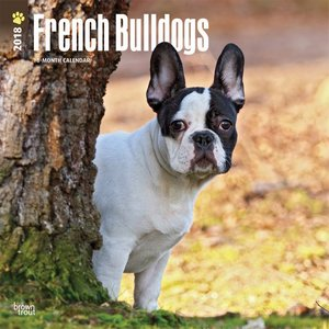 2018 french bulldog wall calendar